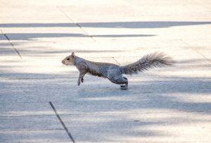 squirrel-3267101_1920